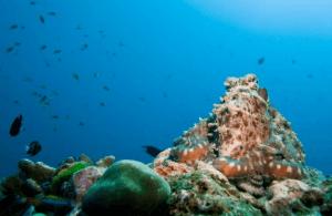 Snorkelling Similian islands